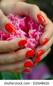 Pink tulip in women's hands with a manicure