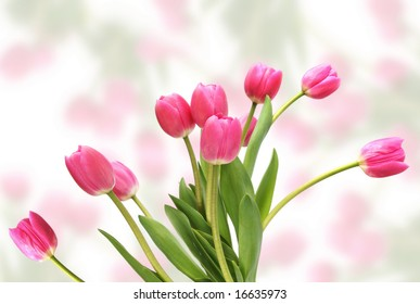 Pink tulips against a blurred floral background.
