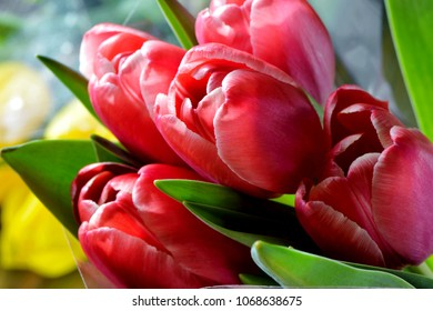 pink tulips bouquet close-up bright holiday background