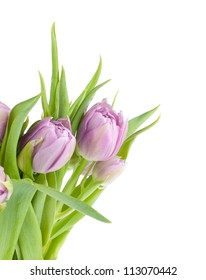 Pink tulips bouquet. Isolated on white background