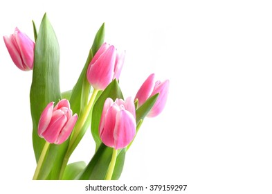 Pink tulips, Bouquet isolated on white background.
