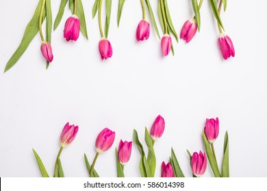 pink tulips isolated on white for two sides. Flat lay, top view.