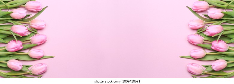 Pink tulips on the pink background. Flat lay, top view. Valentines background. Horizontal, banner format
