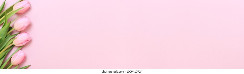 Pink tulips on the pink background. Flat lay, top view. Valentines background. Horizontal, wide screen format, banner format