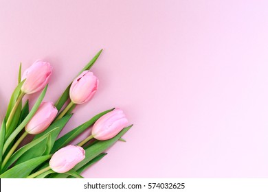 Pink tulips on the pink background. Flat lay, top view. Valentines background. Horizontal,