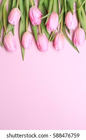 Pink tulips on the pink background. Flat lay, top view. Valentines background. Vertical, flowers in the upper part