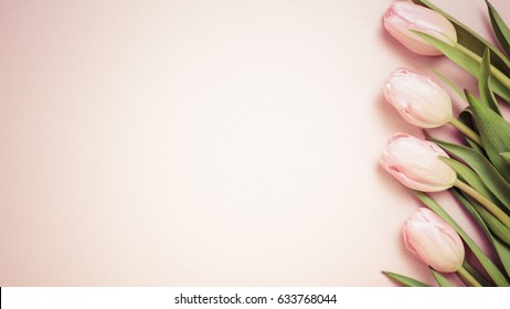 Pink tulips on the pink background. Flat lay, top view. Valentines background. Horizontal, wide screen format, toned