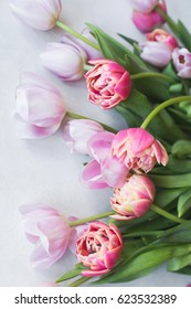 Pink tulips on gray abstract background.