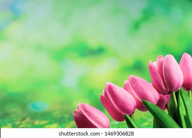 pink tulips on green background