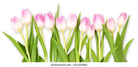 Pink tulips, thank you