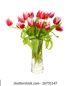 pink tulips are in a vase, isolated on a whiteness