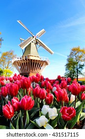 Pink Tulips and Windmill in Keukenhof garden, Netherlands
