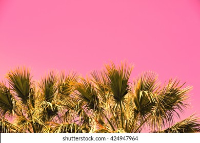 Pink vintage branches of palm trees against  sunset sky