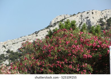 Pink and violet flowers with a mountain in the background