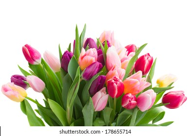 pink  and violet tulips   isolated on white background
