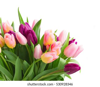 pink   and violet tulips  in pot   isolated on white background