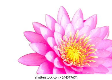 Pink water lilly isolated on white background