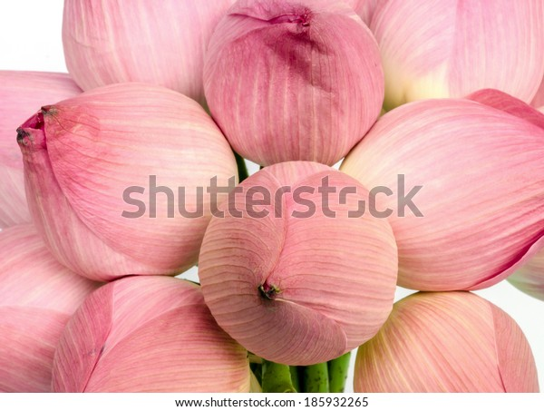 pink water lily flower or lotus flower on white background.