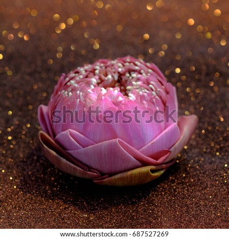 Pink Water Lily Lotus Flower Folding Stock Photo Edit Now