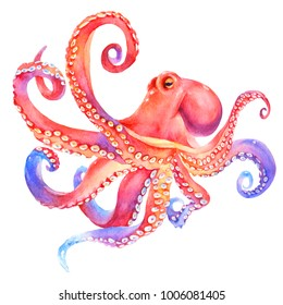 Pink watercolor octopus. sea poulpe,  devilfish  with tentacles illustration isolated on white background
