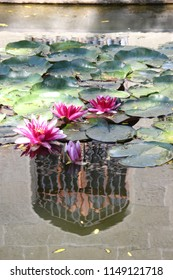 Pink water-lilies in a pond near the Vorontsov Palace in the Crimea.