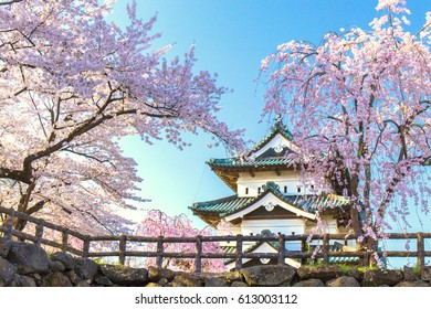 Pink weeping cherry tree, the blue sky and Japanese castle