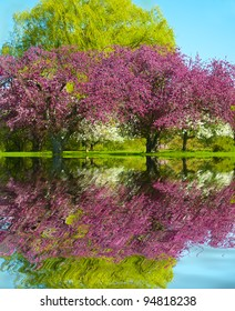 Pink and White Blossom fruit trees reflection in the water
