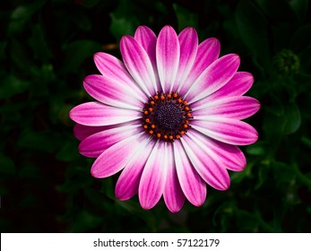 A pink and white flower white orange petals