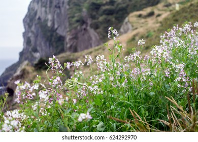 pink white flowers with a mountain background