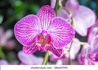 Pink and white orchid  at the orchid show in New York botanical garden in Bronx, New York