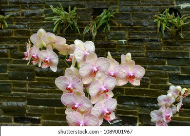 Pink and white orchids against a stone wall backdrop.
