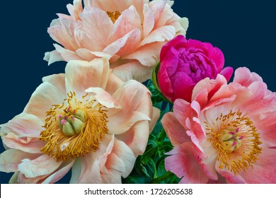 Pink white peony bouquet macro on blue background, fine art still life vintage painting style,filigree detailed texture