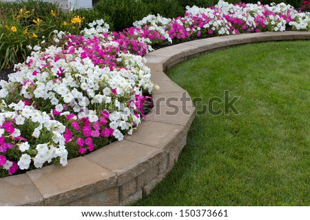 Pink White Petunias On Flower ...