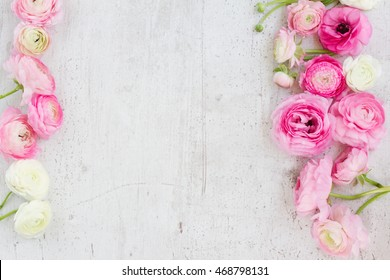 Pink and white ranunculus blooming flowers on white wooden background flat lay scene