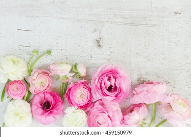 Pink and white ranunculus flowers on aged white wooden desktop with copy space