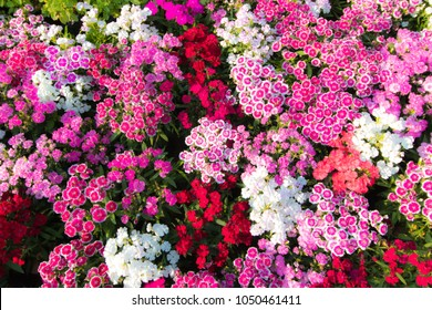 pink, white, red, flowers background