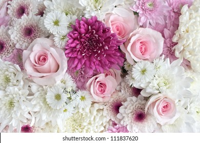 Pink and white roses and daisies as a background