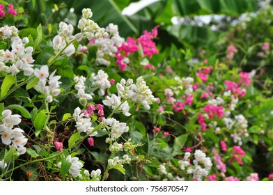 Pink and white small flowers beautiful white and pink flowers and pink and white small flowers beautiful white and pink flowers and beautiful green leaves in sunny days ez canvas mightylinksfo