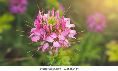 Blumen Trog Stock Photos, Images & Photography | Shutterstock