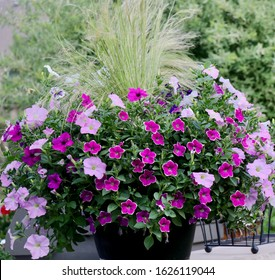 Pink and white surfinia petunias are the fillers and the spilliers in this black pot on patio while wispy mexican feather grass is the thriller