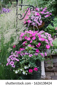 Pink and white surfinia petunias in hanging baskets with Karl Foerster Feather reed grasses in the background
