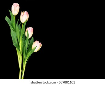 Pink and white tulips on a black surface with space for copy to the right.