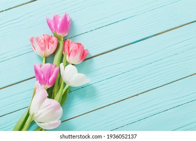 pink and white  tulips on blue wooden background