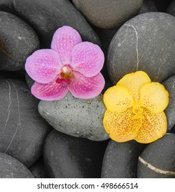 Pink and yellow on stones background