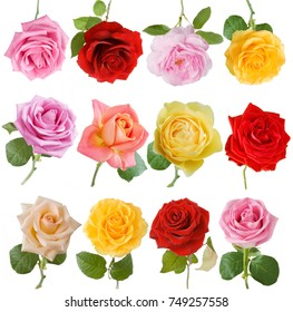 Pink, yellow, red, cream rose set isolated on white background