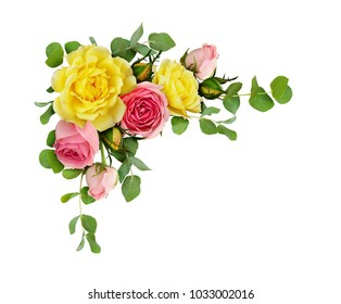 Pink and yellow rose flowers with eucalyptus leaves in a corner arrangement isolated on white background. Flat lay. Top view.