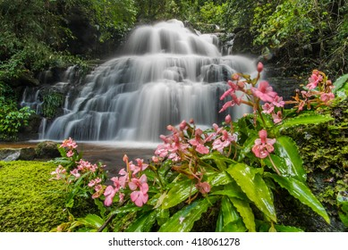 "The Pink-Lipped Habenaria (Pink Snap Dragon Flower) in front of ""Mundeang"" waterfall in Phu hin rong kra national park,Phitsanulok province,Thailand,defocused for background"