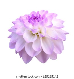 Pink-white a dahlia. Flower isolated on a white background.