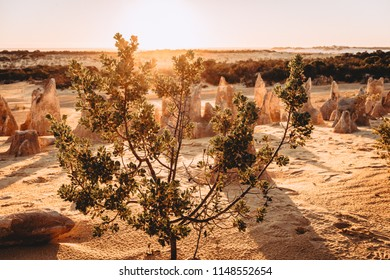 The Pinnacles Desert at Nambung National Park WA Australia. Scenic desert area featuring numerous limestone pillars, plus observation decks & parking bays.