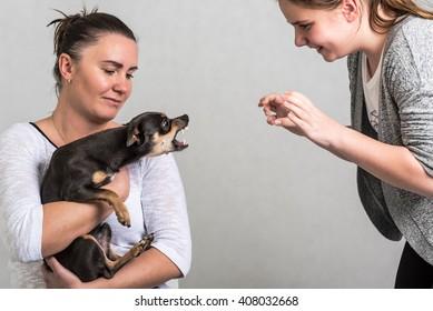 Pinscher dog defend the owner